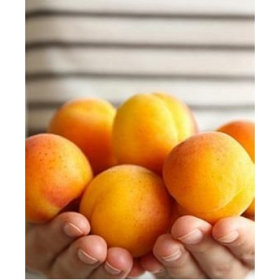 """Саженец абрикоса """"Лескоре"""""""